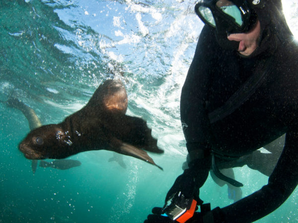 Dive with Seals & Kayak with Penguins
